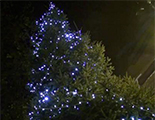 Berkhamsted Christmas Lights
